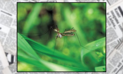 As weather heats up, 'tip and toss' to eliminate mosquito breeding areas
