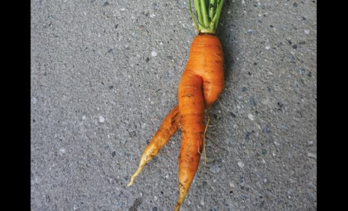 Commentary: Support ugly produce, which are just as good as their counterparts