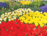 2018 Flower Bed Winners Announced