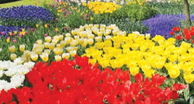 2018 Flower Bed Winners Announced