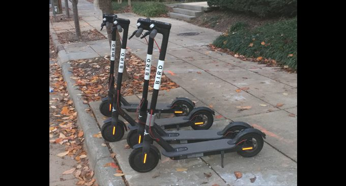 Bird Talk: Public Safety Committee begins discussion to regulate scooters