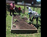 LaDeara Crest community garden provides fresh vegetables for their neighbors